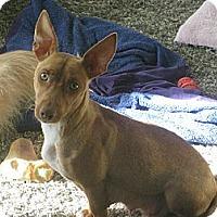 Adopt A Pet :: Autumn - Marietta, GA