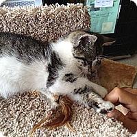Adopt A Pet :: Binky - Island Park, NY