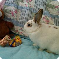 Adopt A Pet :: Bailey - Williston, FL