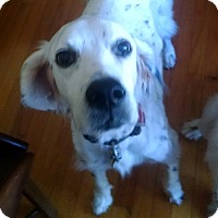 Adopt A Pet :: Rocky-GA - Pine Grove, PA
