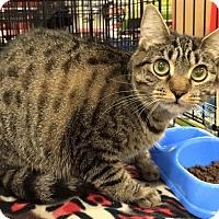 Adopt A Pet :: LiL Kristy - Harrisburg, NC