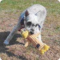 Adopt A Pet :: Frodo - Sharonville, OH
