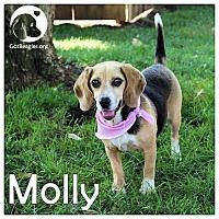 Adopt A Pet :: Molly - Novi, MI