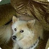 Adopt A Pet :: Kody of  Waynesville, NC - Mooresville, NC