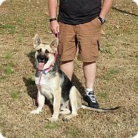 Adopt A Pet :: Ginger - Greeneville, TN