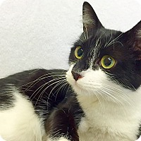 Adopt A Pet :: Gozer - Mission Viejo, CA