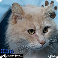 Adopt A Pet :: Clint - Fort Mill, SC