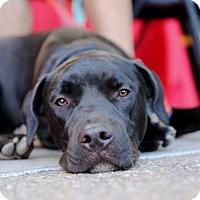 Adopt A Pet :: King - San Diego, CA