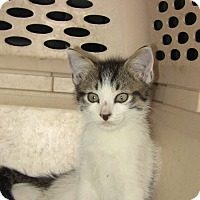 Adopt A Pet :: Petunia - West Palm Beach, FL
