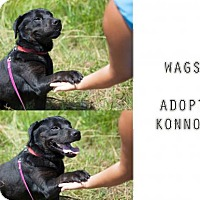 Adopt A Pet :: Connor - Wagoner, OK