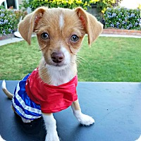 Adopt A Pet :: Ginger is just a puppy! - Redondo Beach, CA