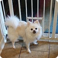 Adopt A Pet :: Dumplin - conroe, TX