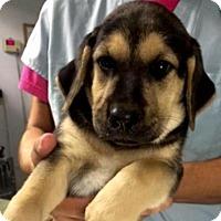 Adopt A Pet :: Jager - Barnegat, NJ