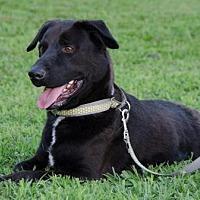 Adopt A Pet :: Hotdog - Midlothian, VA