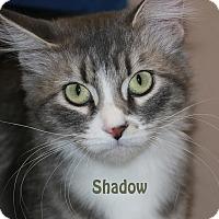 Adopt A Pet :: Shadow - Idaho Falls, ID
