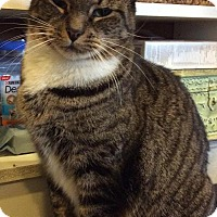 Adopt A Pet :: Kashi - Breinigsville, PA