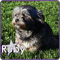 Adopt A Pet :: Ruby - Excelsior, MN