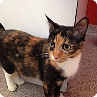 Adopt A Pet :: Beautiful - Sarasota, FL