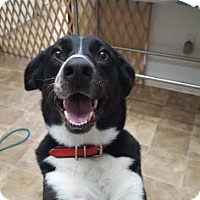 Adopt A Pet :: Domina - Chico, CA