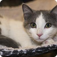Adopt A Pet :: A..  Baron - Mooresville, NC