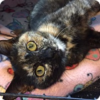 Adopt A Pet :: ADORA - Burlington, NC