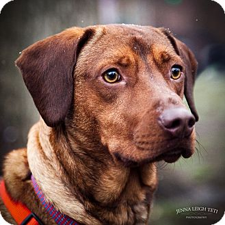 ... Mix Dog for adoption in Jersey City, New Jersey - Chester Alan Arthur