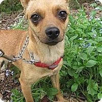Adopt A Pet :: BRIANNA - Elk Grove, CA