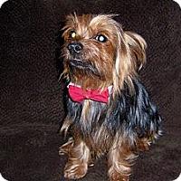Adopt A Pet :: Dexter - Goodyear, AZ