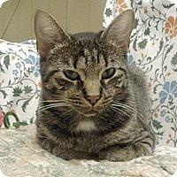 Adopt A Pet :: Lola - Germansville, PA
