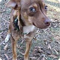 Adopt A Pet :: Pippin - Mocksville, NC