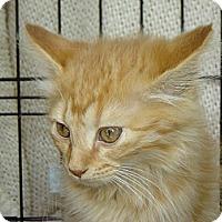 Adopt A Pet :: Huey - Mundelein, IL