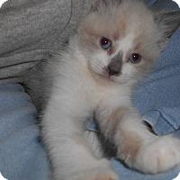 Adopt A Pet :: Winter - Richland, MI