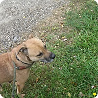 Adopt A Pet :: #386-14 RESCUED! - Zanesville, OH