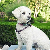 Adopt A Pet :: Blossom: Ok w/cats + video - Los Angeles, CA