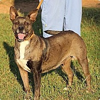 Cattle Dog Mix Dog for adoption in Byron, Georgia - Louisiana