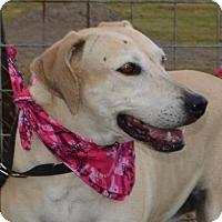 Adopt A Pet :: MOLLYE - Liverpool, TX