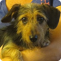 Adopt A Pet :: Annalise - Westport, CT
