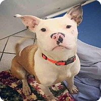 Adopt A Pet :: XAVIER - Canfield, OH