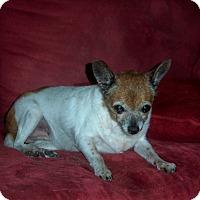 Adopt A Pet :: Molly - Homosassa, FL