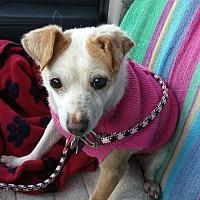 Adopt A Pet :: Contessa - Harrisburg, PA
