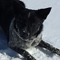 Adopt A Pet :: Scout (Courtesy Listing from Argos, IN) - Plymouth, IN