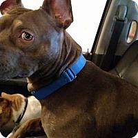 Adopt A Pet :: Fynn - Flint, MI