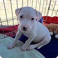 Adopt A Pet :: Jenna - Scottsdale, AZ