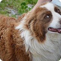 Adopt A Pet :: Bruce - Sparta, NJ