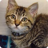 Adopt A Pet :: Anastasia - Dublin, CA