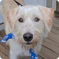 Adopt A Pet :: Nolan - Baton Rouge, LA