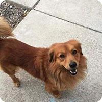 Adopt A Pet :: Rusty - Thousand Oaks, CA