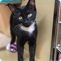 Adopt A Pet :: Elvis - Memphis, TN