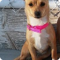 Adopt A Pet :: Tinker - Encino, CA