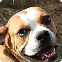 Adopt A Pet :: Lotto - Ottawa, ON